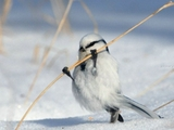 Vogel macht Kraftsport