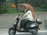 Hund aufn Motorrad