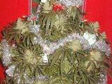 Hanf-Weihnachtsbaum