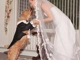 Tierische Hochzeit