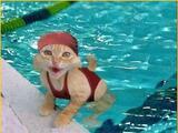 Bade Katze