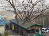 Ein Baumhaus