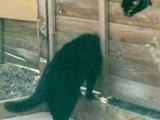 Katze mit langem Hals