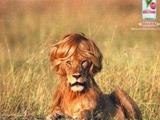 Löwenmähne dank Haarspray