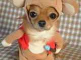 Realer Plüschhund