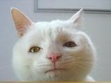 Gelangweilte Katze
