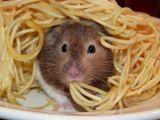 Maus isst Spagetti