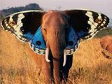 Schmetterfant