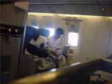 Panda im Flugzeug