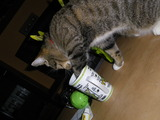 Katze probiert mal