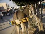 Israelischer Eselskennzeichen