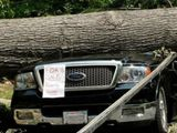 Auto mit Baumschaden