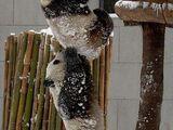 Pandabrüder
