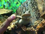Hey Frosch
