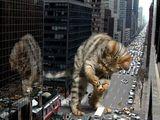 MonsterKitty zerstörrt NewYork