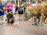 Hund vs. Dino