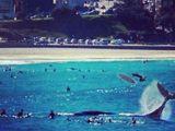 Surfen mit Wal