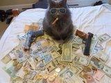 Meine Gangsterkatze