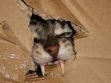 Schrödingers Katze lebt
