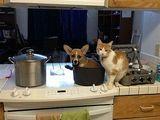 Den Hund kochen