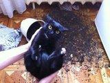 Da war eine Maus im Blumentopf!