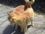 Echte Katzenliebe