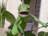 Süßes Chameleon