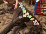 Mit dem Hund spielen