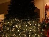 Zu klein für den Baum