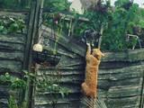 Katzenschauspieler