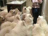 Liebling aller Hunde