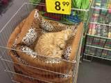 Ein perfekter Schlafplatz
