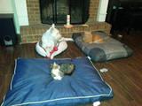 Hundebett und Katzenbett