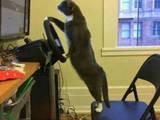 Katzenrennen