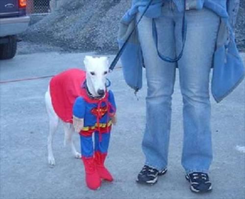 Karneval-Hunde