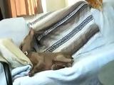 Hund klaut Decke