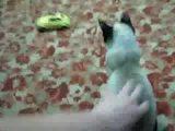 Katze geht in die Luft