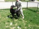 Hund begrüßt Soldat