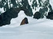 Balzen im Schnee