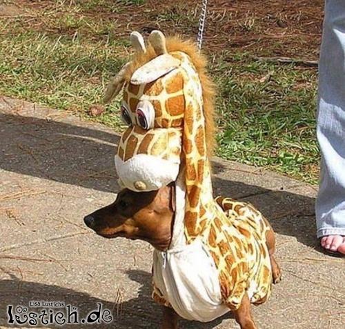 Giraffen-Hund