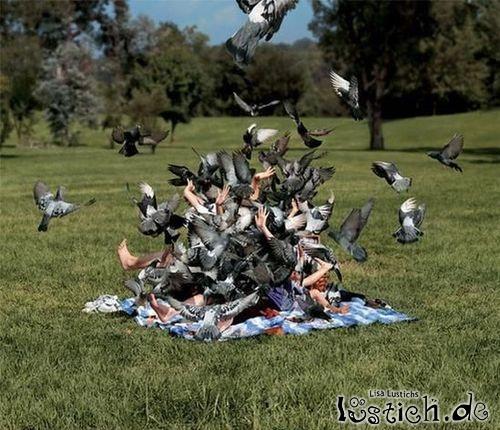 Schönes Picknick im Park