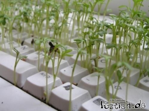 Eine Tastatur als Plantage
