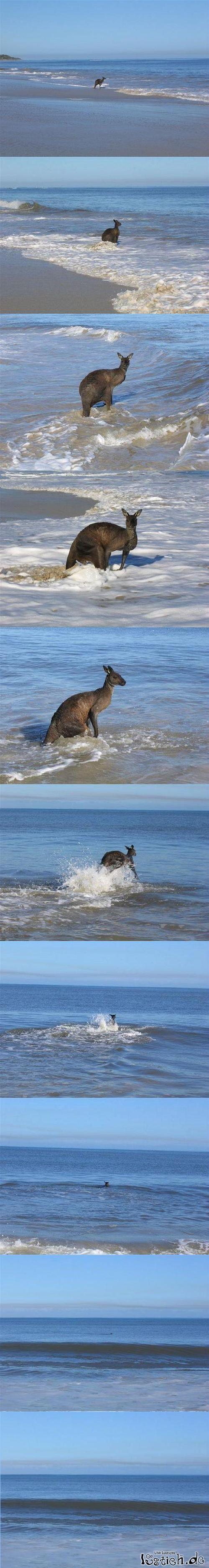 Nicht jeder mag Australien