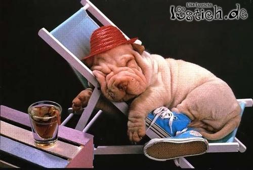 Wellnesshund