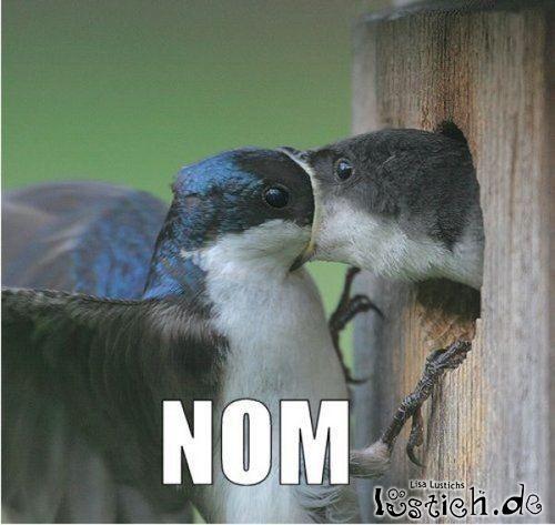 Vogel isst Vogel
