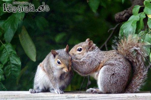 Eichhörnchen tuscheln