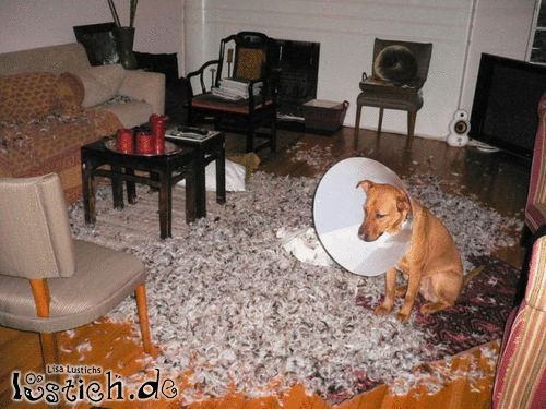 Hundetrichter