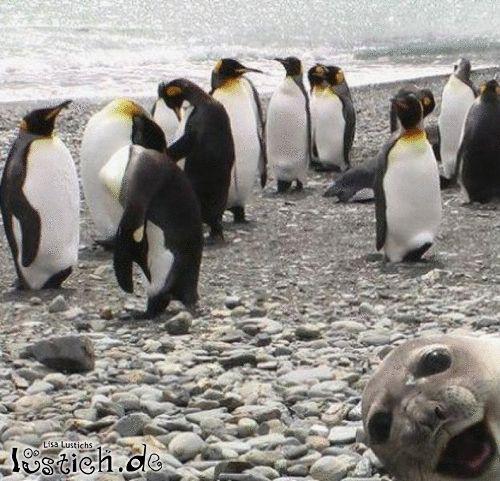Pinguine fotografieren