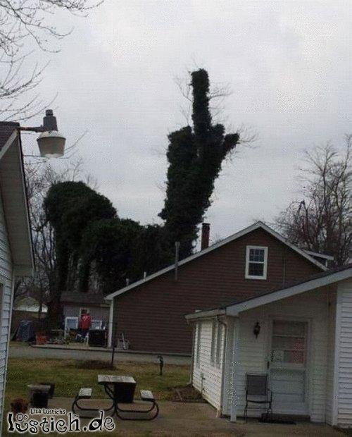 Baum stutzen