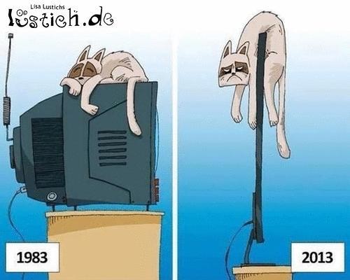 Arme Katzen